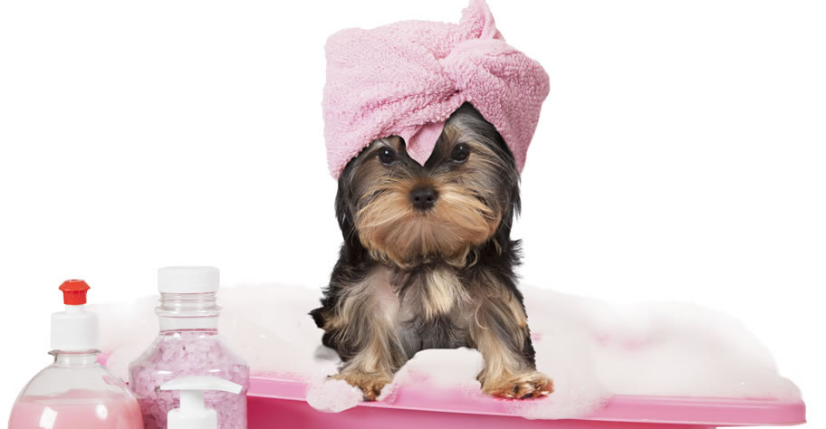 Dog grooming in Thousand Oaks