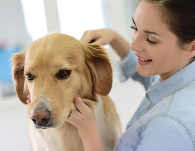 mobile pet groomers simi valley thousand oaks